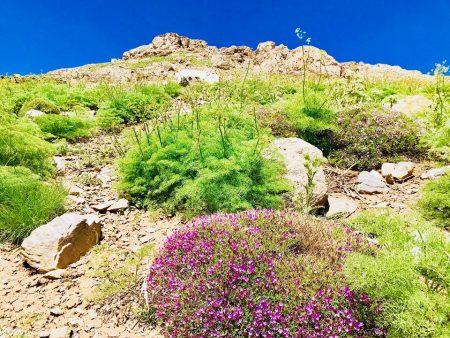 پرۆژەیەک لەبارەی دروستکردنی مۆزەخانەی گوڵی سروشتی کوردستان دەخرێتە ڕوو